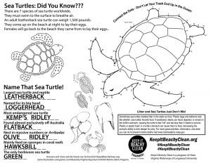 sea turtle activity sheet answers